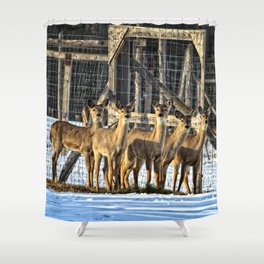 Whitetail Deer Stare Down Shower Curtain