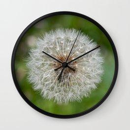 Shower head, infruttescence of the dandelion flower Wall Clock
