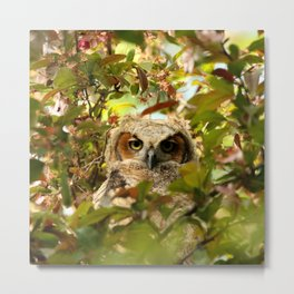 Baby owl in spring blossoms Metal Print