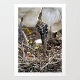 Wood Stork and her Babies Art Print