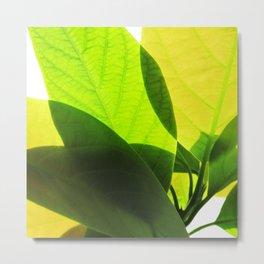 Avocado Leaves Metal Print