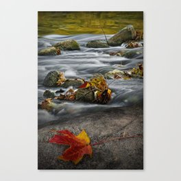 Red Autumn Leaf on a Rock along the River Shore Canvas Print