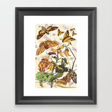 Insect Life Framed Art Print
