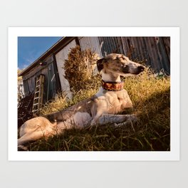 Wonder Whippet Photograph Art Print