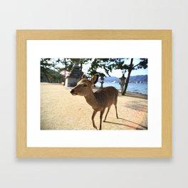 a deer in itsukushima Framed Art Print