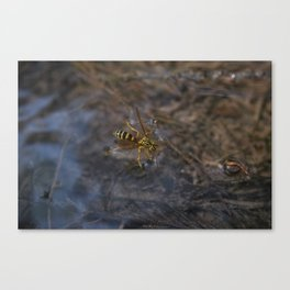 wasp over water Canvas Print