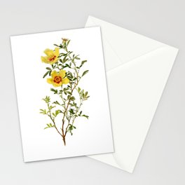 Rosa Hardii by Alfred Parsons (part of The Genus Rosa, published in 1914) Stationery Cards