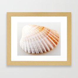Scallop Seashell Framed Art Print