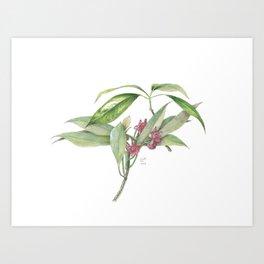 Star Anise Botanical Illustration Art Print