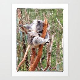 Koala Art Print