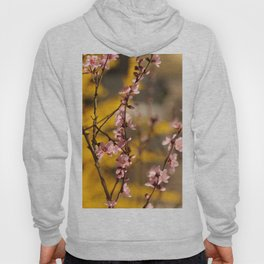 Pink Spring Surprise infront of Yellow Wush Hoody
