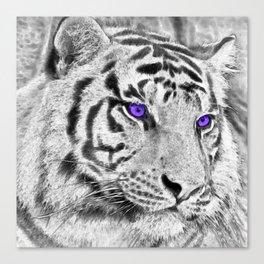 Violet Eyes Canvas Print