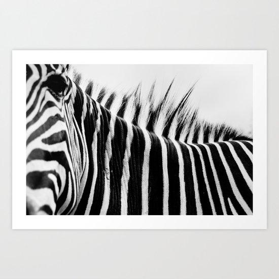 Zebra Stripes & Back Art Print