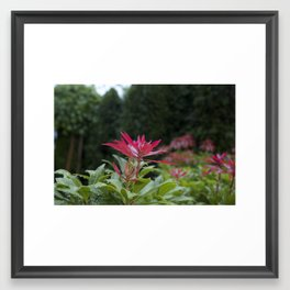 Green and Red, just like Christmas Framed Art Print