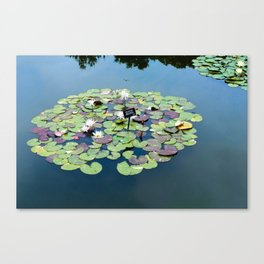 lily pads at the Brooklyn Botanical Gardens Canvas Print
