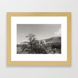 Joshua Tree National Park Landscape Framed Art Print