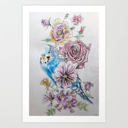 Blue Budgie and Rose Watercolor Art Print