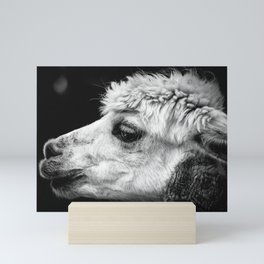 Alpaca Pako Animal Mini Art Print