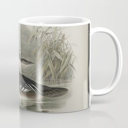 332 Mergus cucullatus. Hooded Merganser Coffee Mug