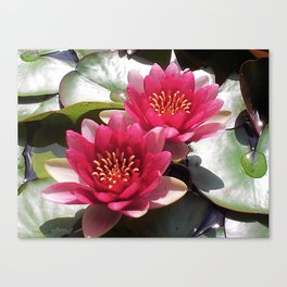 Pink Water Lily Duo Canvas Print