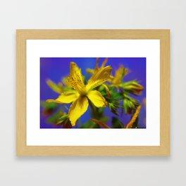 Yellow wild flower with blue  Framed Art Print