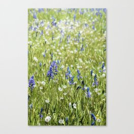 Camas and Dandelions Canvas Print