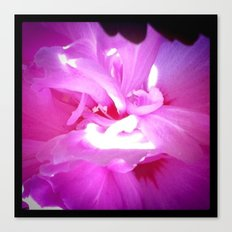 Peer into Pink Canvas Print