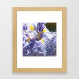 The love of the Iris by Teresa Thompson Framed Art Print