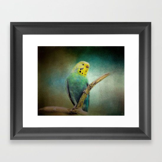 The Budgie Collection - Budgie 1 Framed Art Print