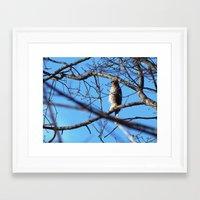 hawk Framed Art Prints featuring Hawk by ACamp