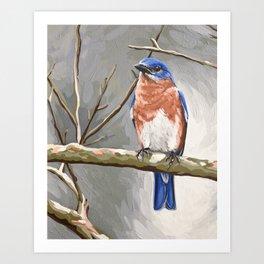Eastern Bluebird 2 Art Print