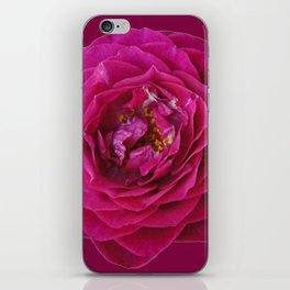 """BLUE YONDER"" MAGENTA ROSE  MAGENTA COLOR ART iPhone Skin"