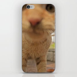 Curious Kitty iPhone Skin
