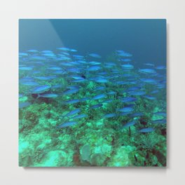 Blue Fish Exodus Metal Print