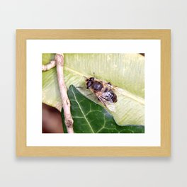 Drone or Hover Fly Framed Art Print