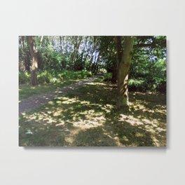 Sunshine playing through foliage Metal Print