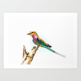 Beautiful Lilac Breasted Roller Art Print