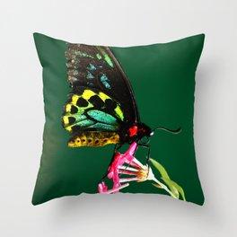 Male Cairns Birdwing Butterfly Throw Pillow