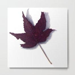 Sweet Gum Leaf Watercolor Metal Print