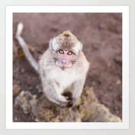 Monkey in Bali Art Print