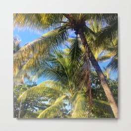 Amoungst the Palms Metal Print