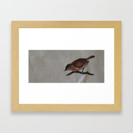 A red Bird Framed Art Print
