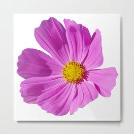 Pink Cosmos Flower Metal Print