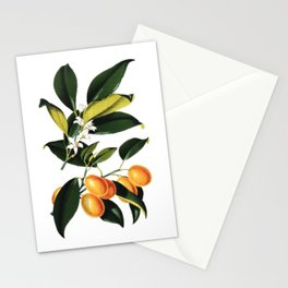 Kumquat - Citrus Japonica   Vintage botanical illustration Stationery Cards