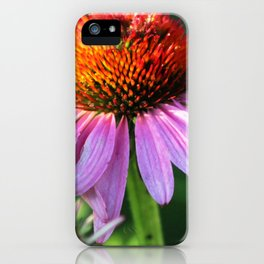 Cone Flower or Echinacea in Horicon Marsh iPhone Case