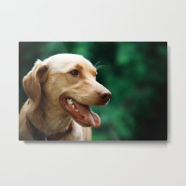 Happy Dog with Tongue Out. Metal Print
