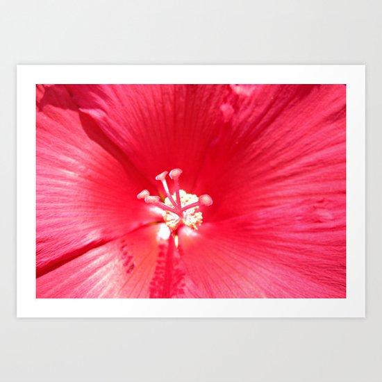 Into the Hibiscus Art Print