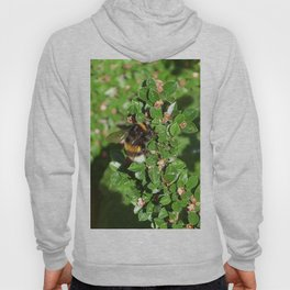 Bumble Bee on Cotoneaster  Hoody