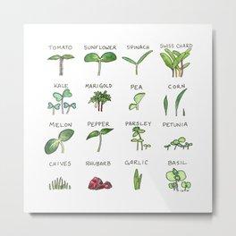 Seedlings Metal Print