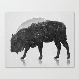 European Buffalo (B&W) Canvas Print